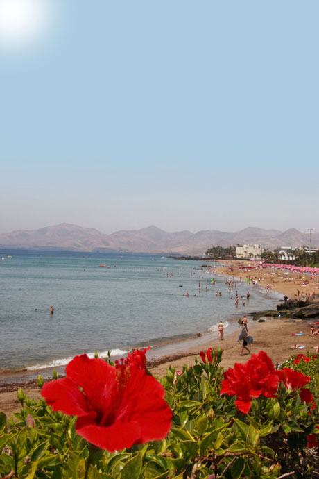 Beach Lanzarote flowers photo
